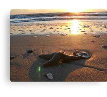 Sunrise Starfish Canvas Print