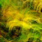 Autumn grasses by Patrick Morand