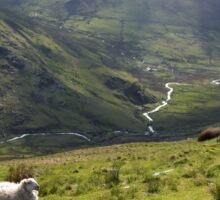 Sheep On Snowdon Sticker