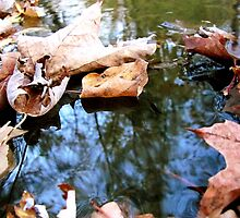 Fall Stream by Sheri Schluter