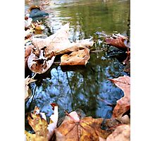 Fall Stream Photographic Print