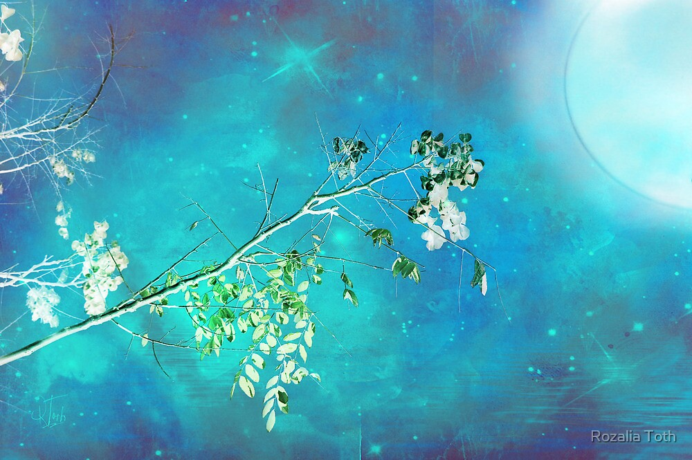 Moonlight Sonata by Rozalia Toth