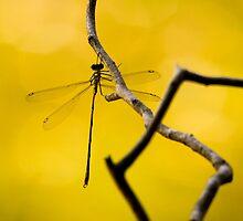 Yellow ... by Gary  Davey (Jordy)