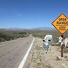 Open range, loose stock by Susan Littlefield
