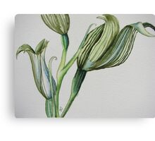 Stripey Orchid Canvas Print