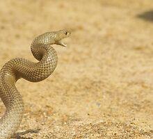 Not So Happy by Snakey