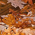 Fall - Wet Leaves on the Deck by Sherry Hallemeier