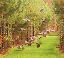 Turkeys In Flight by Ginger  Barritt