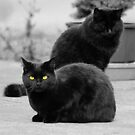 The Black Cat Society by Zolton