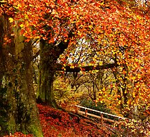 Trees' Autumn Blossom by Harry Purves