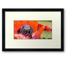 Poppy-ing Out to Lunch! Framed Print