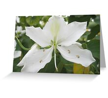 White Beauty - Perth Greeting Card