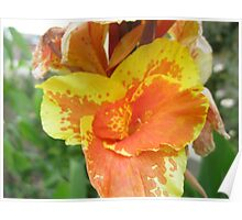 Canna Lily Perth Poster