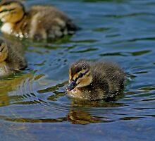 Ducklings by Debbie Stika
