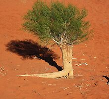 Desert Shadow by Kymbo