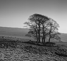 Henside Copse 01 - Yorkshire Dales, UK by ExclusivelyMono
