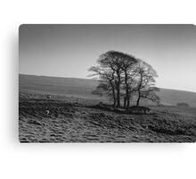 Henside Copse 01 - Yorkshire Dales, UK Canvas Print
