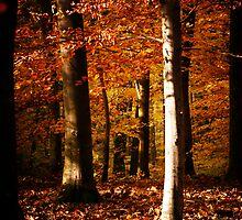 Autumnal mood #7 by Ronny Falkenstein