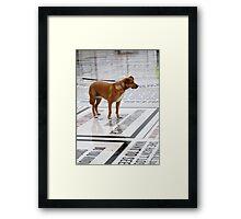 dog reading jokes Framed Print