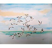 Gulls at Sea Photographic Print