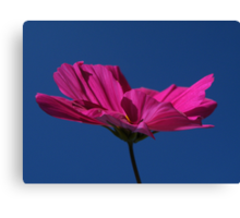 Pink on blue.... i love you :0) Canvas Print