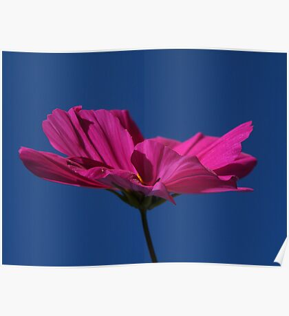 Pink on blue.... i love you :0) Poster