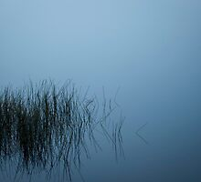 Reflectiive Stillness by Shane Viper