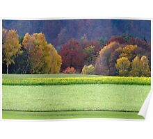 Canola field in fall Poster