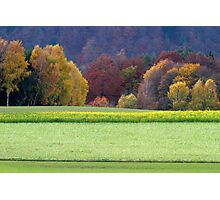 Canola field in fall Photographic Print