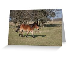 Marching Pony Greeting Card
