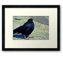 Sitting Bird Framed Print