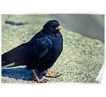 Sitting Bird Poster