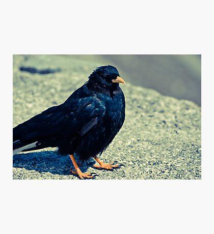 Sitting Bird Photographic Print