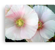 PINK MARSHMALLOW 2 Canvas Print