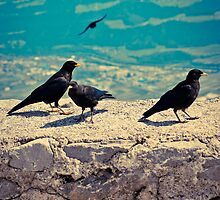 Birds on Wall by Liev
