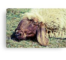 Sleeping Sheep Canvas Print