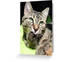Pondering Momma Greeting Card