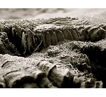 Peppered Piling Photographic Print