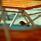 Sparrow 3 by Liev