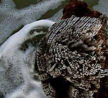 Sea Swirls by Mandi  Ruch