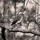 Mocking Bird by Jay Reed