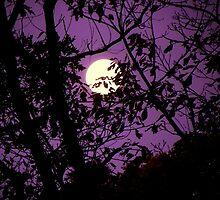 Morning Moon by Kate Eller