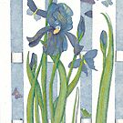 Blue Iris by Judy Newcomb