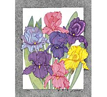 Dots of Irises Photographic Print