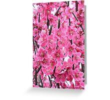 Let it be spring !  by Brown Sugar.Views (42) favorited by (2) thx! Greeting Card