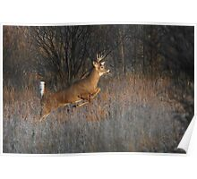 Buck on the Run - White-tailed Deer Poster