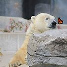 The bear and the butterfly by NewfieKeith