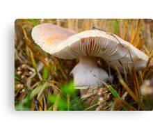 Mushroom - Autumn Colours Canvas Print