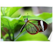 Hanging Around Glasswing - Greta oto Poster