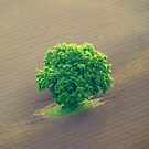 Lone Tree. by Livvy Young